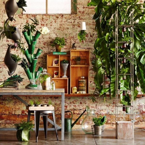 plantas_de_interior