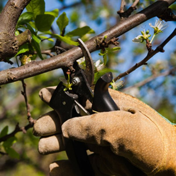 curso-arboricultura