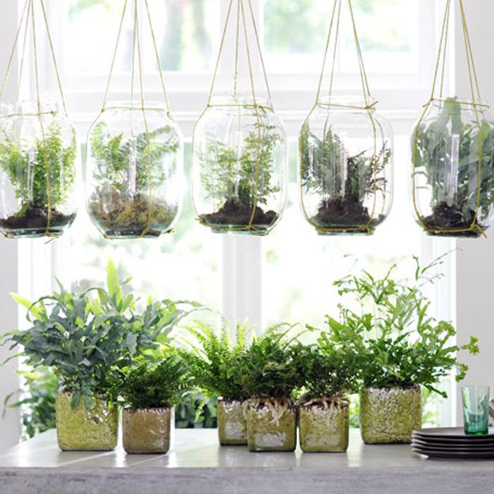 Las 50 especies de plantas de interior m s utilizadas for Plantas de interior precios