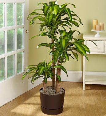 Plantas de interior jardiarte for Abono para plantas de interior